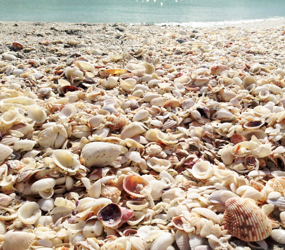 charter fishing and shelling sanibel island