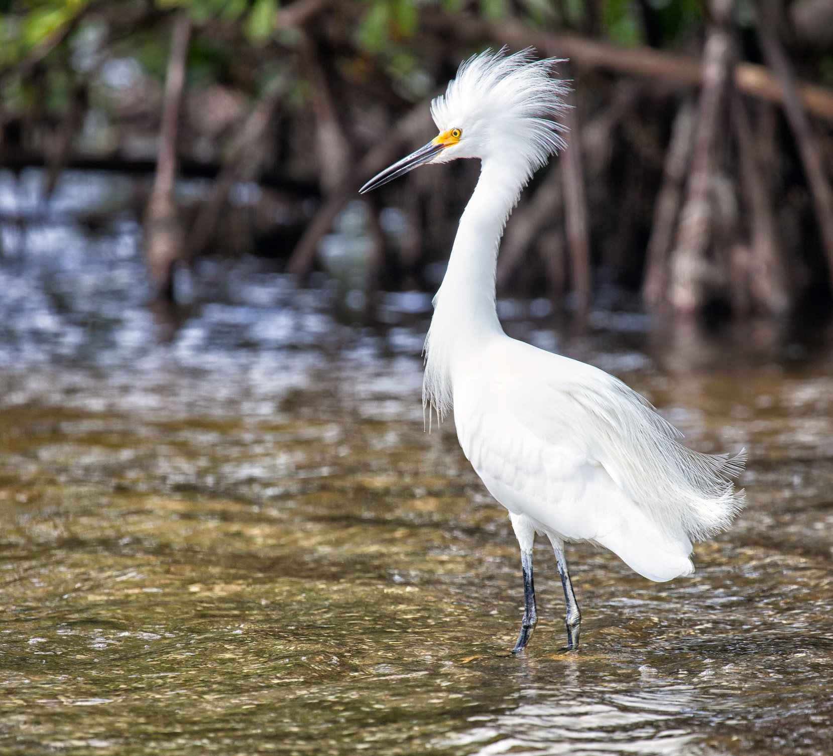 Sanibel Island beaches wildlife